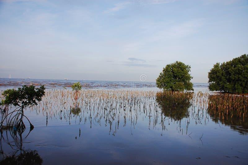 Foresta della mangrovia, aree umide fotografie stock