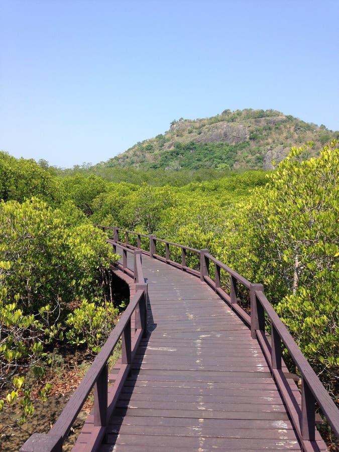 Foresta della mangrovia e ponte di legno fotografie stock libere da diritti