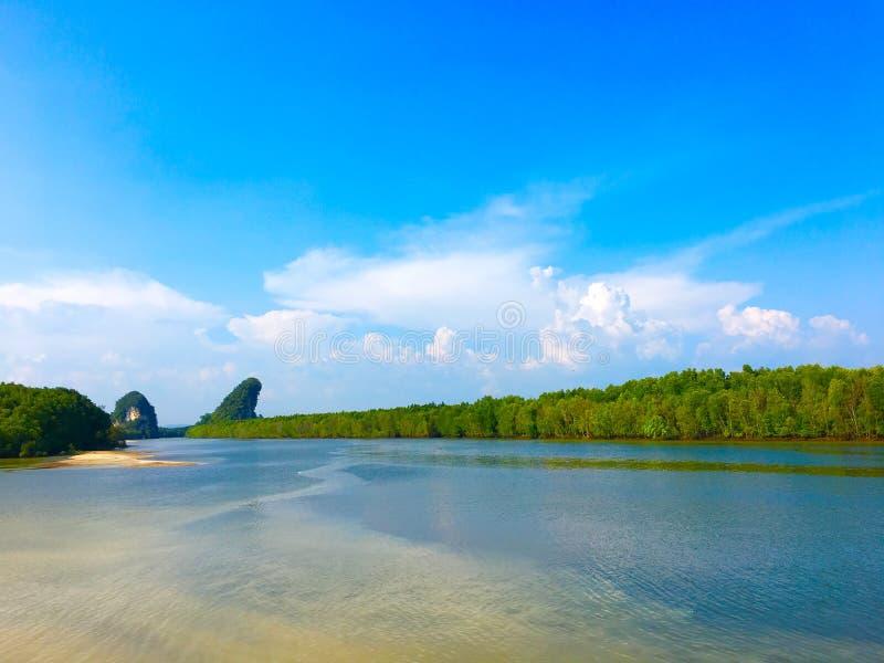 Foresta della mangrovia in Tailandia fotografia stock