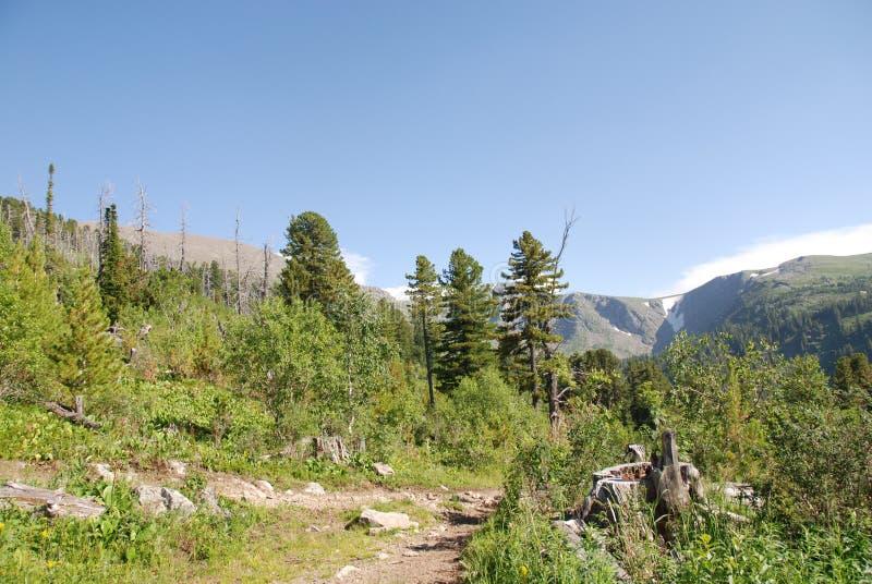 Foresta della montagna fotografie stock