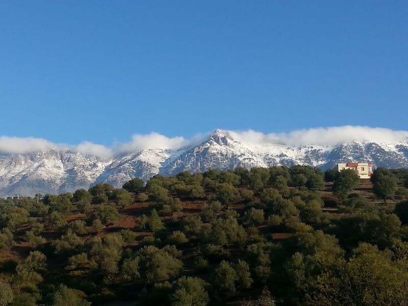 Foresta della montagna di Snowy fotografia stock libera da diritti