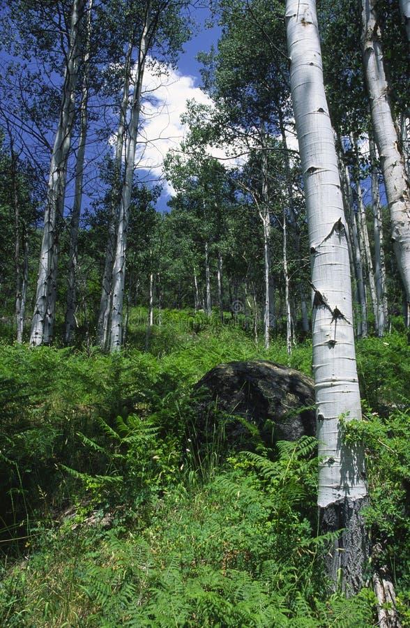 Foresta della montagna in montagne rocciose fotografia stock libera da diritti