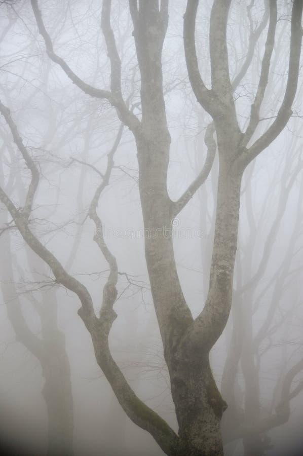 foresta della nebbia fotografia stock