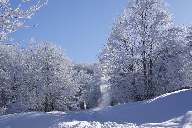 Foresta della neve fotografia stock
