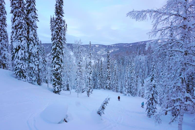 Foresta della neve, taiga in Siberia, Russia immagini stock libere da diritti