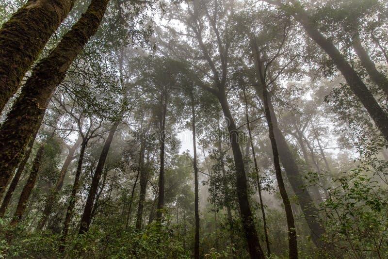 Foresta della primavera in nebbia immagini stock