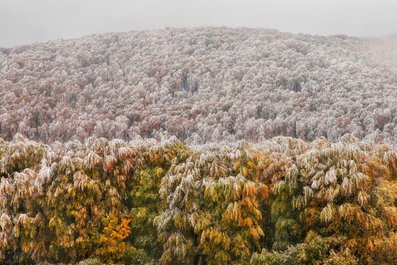 Foresta della quercia in autunno fotografia stock libera da diritti