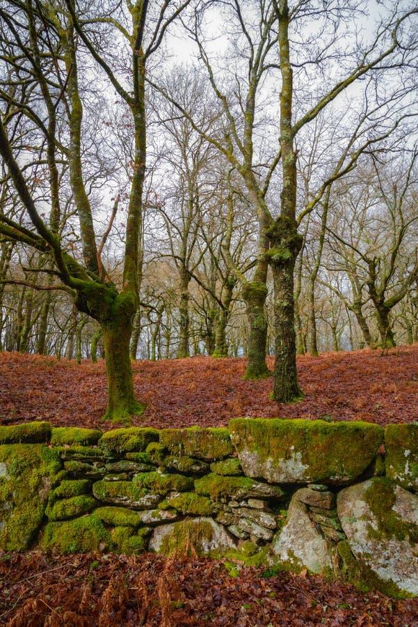 foresta della quercia e parete di pietra immagine stock libera da diritti