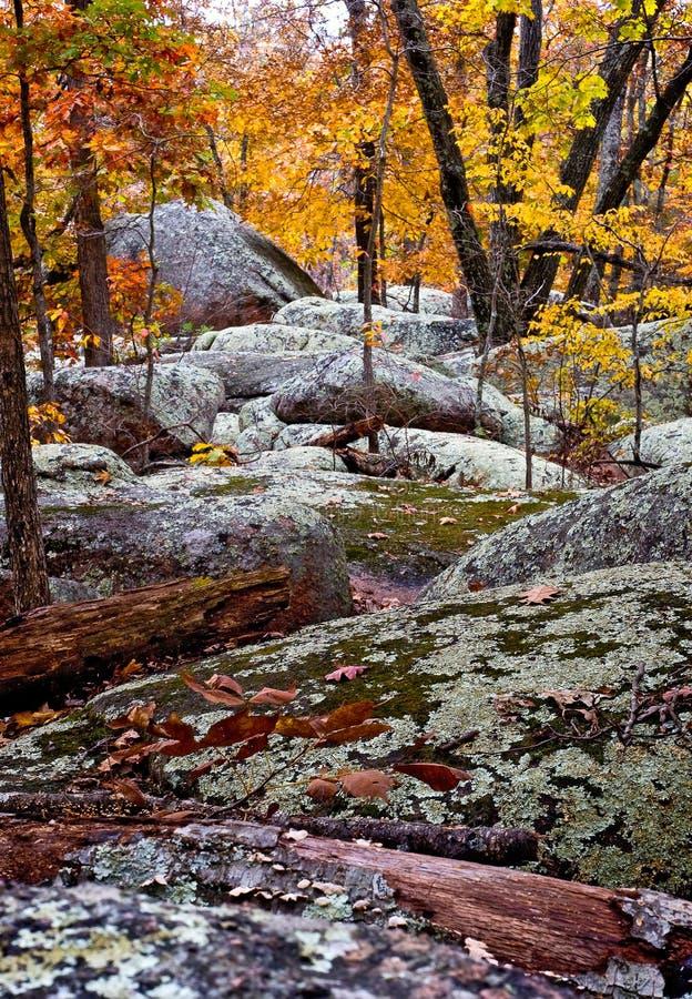 Foresta della roccia di Elelphant immagini stock