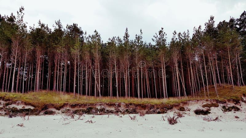 Foresta della spiaggia immagine stock libera da diritti