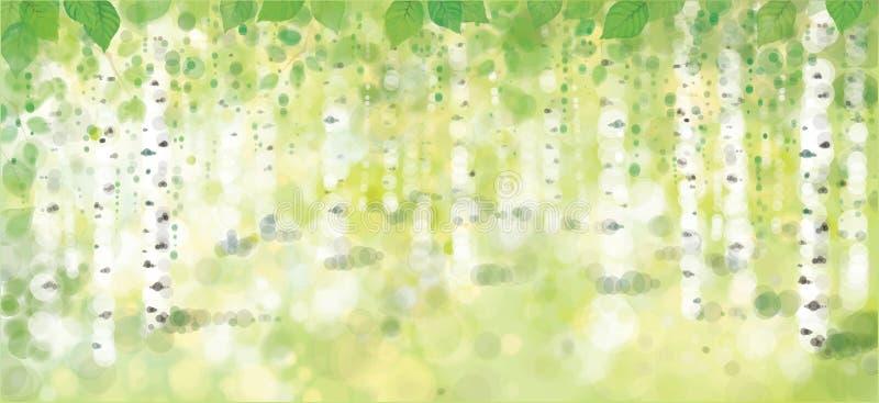 Foresta delle betulle di vettore royalty illustrazione gratis
