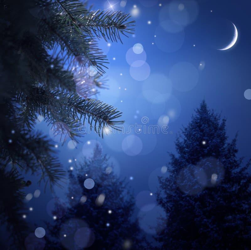 Foresta dello Snowy sulla notte di natale fotografia stock