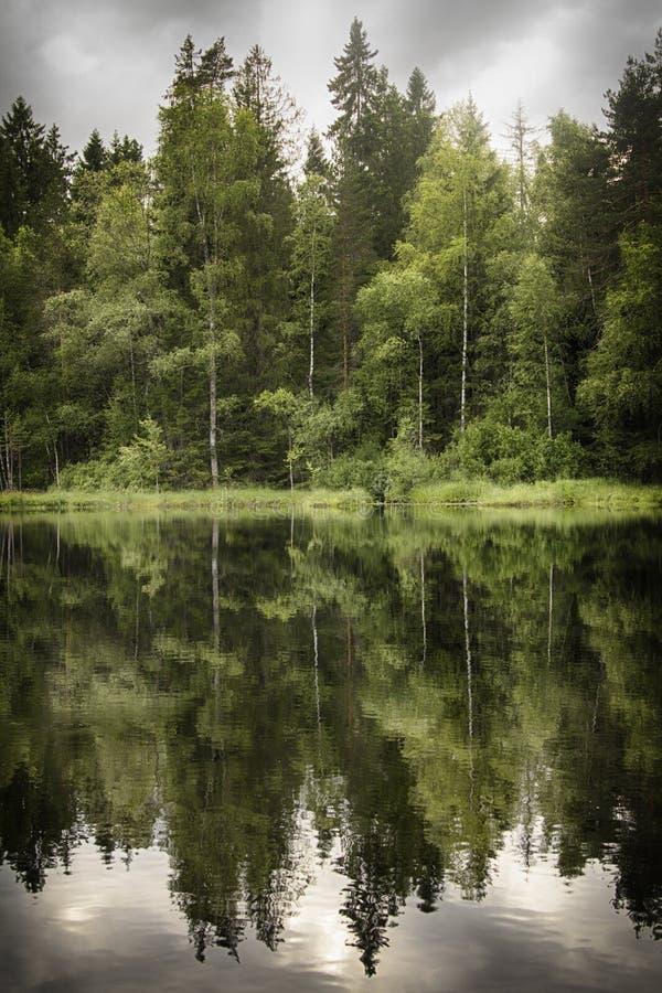 Foresta dello specchio fotografie stock libere da diritti