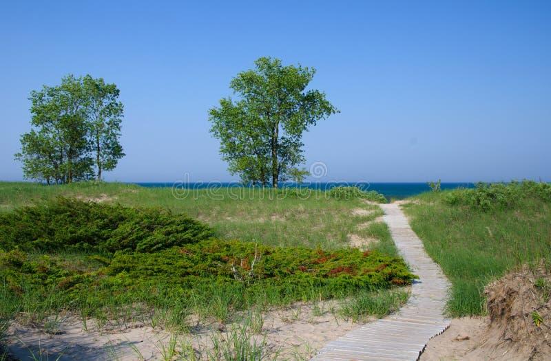 Foresta dello stato della spiaggia del punto fotografia stock