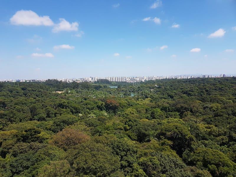Foresta dello zoo fotografie stock