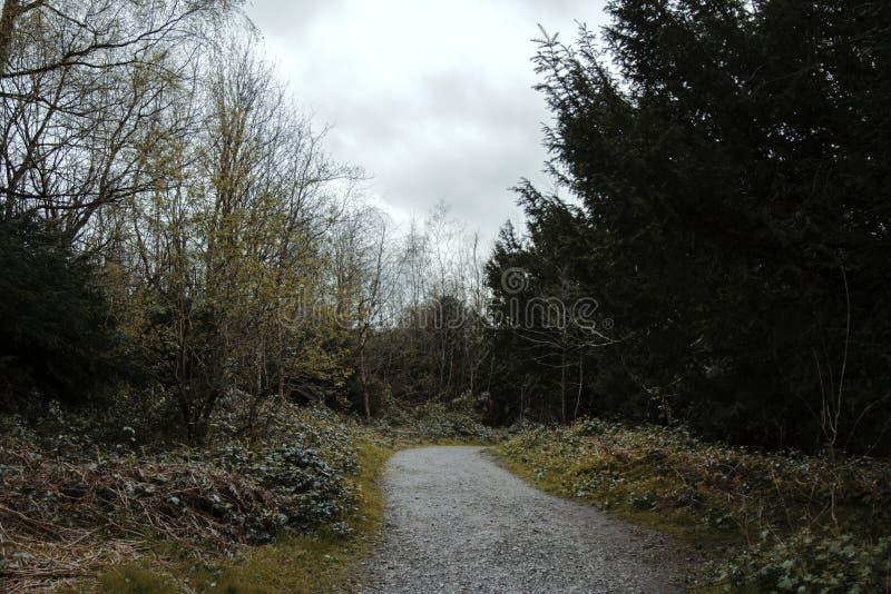 Foresta di autunno - 2 fotografia stock libera da diritti