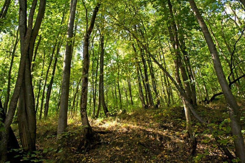 Foresta di autunno fotografia stock
