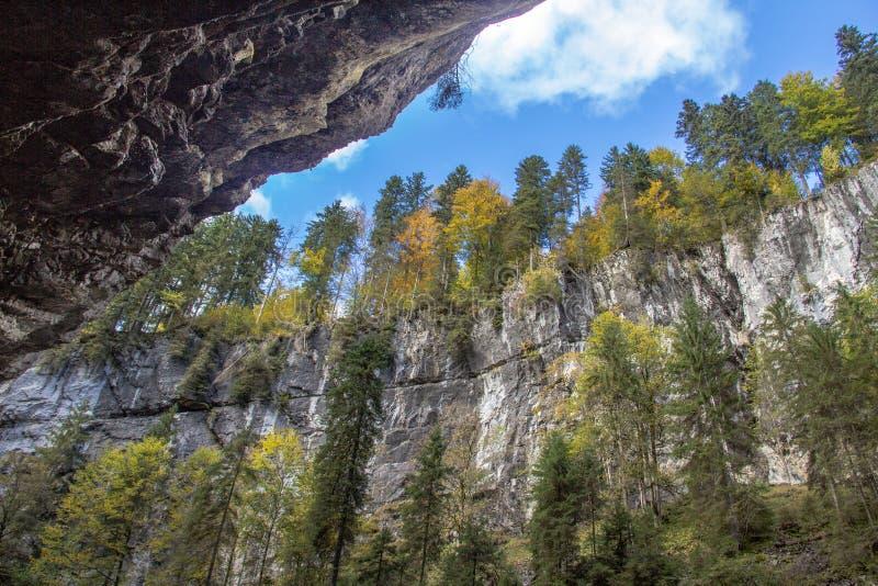 Foresta di autunno che cresce sulle rocce fotografia stock
