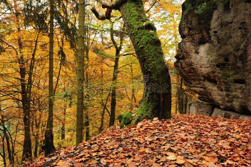 Foresta di autunno con le foglie fotografia stock