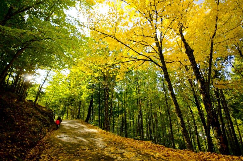 Foresta di autunno di paradiso fotografia stock