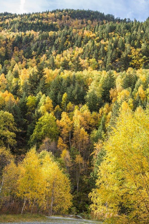 Foresta di autunno di Pirenei fotografia stock