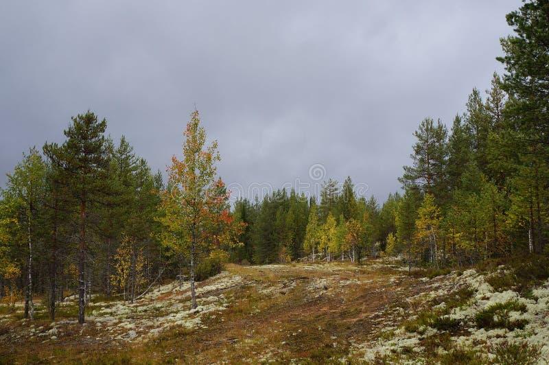 Foresta di autunno nella regione della Carelia fotografie stock
