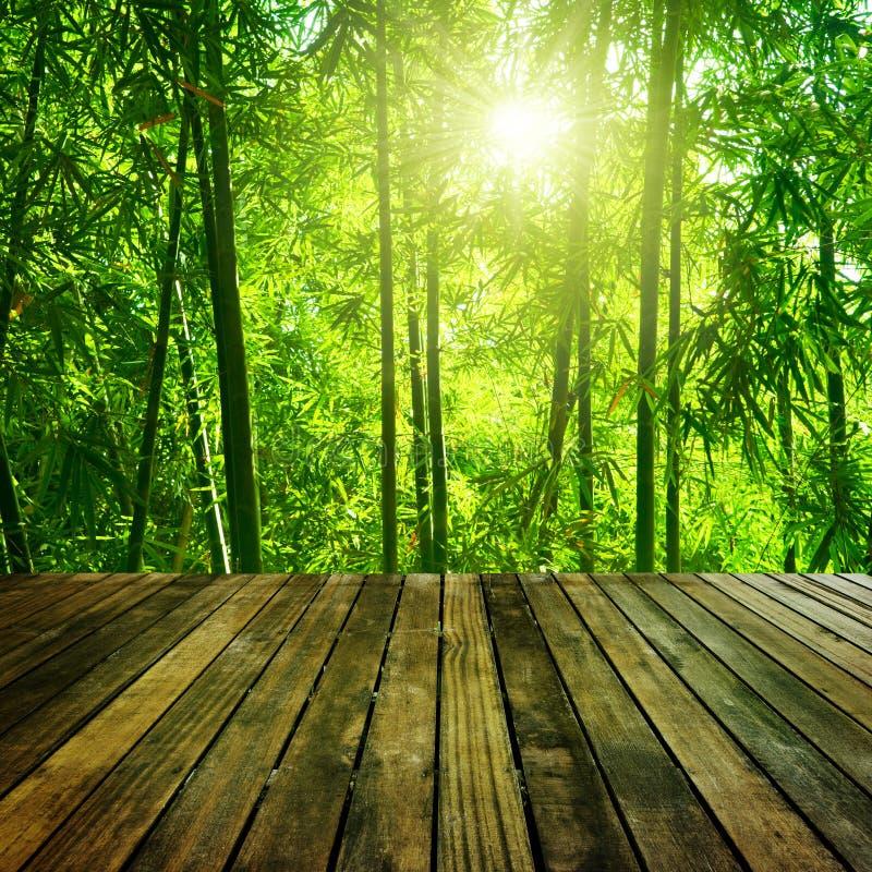 Foresta di bambù. fotografia stock