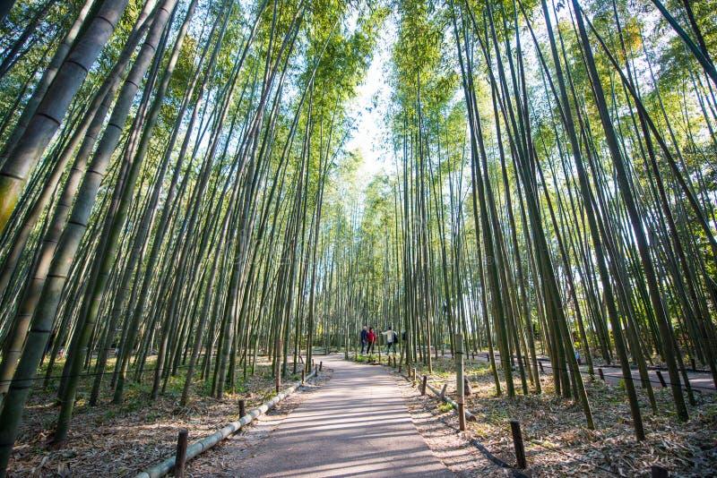 Foresta di bambù in Arashiyama, Kyoto fotografia stock