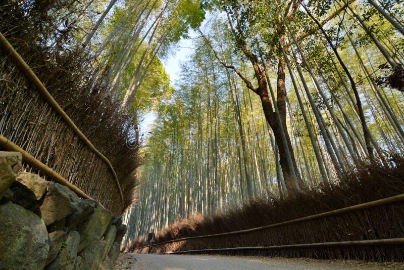Foresta di bambù Arashiyama di Sagano kyoto japan fotografia stock