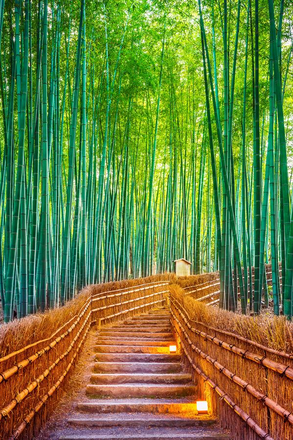 Foresta di bambù a Kyoto, Giappone fotografia stock libera da diritti