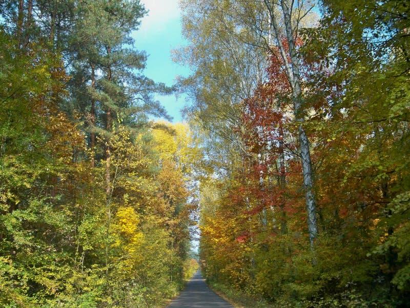 Foresta di Beatifuul in Polonia fotografia stock