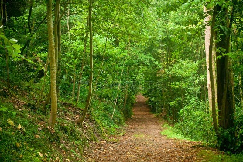 Foresta di Buçaco fotografia stock