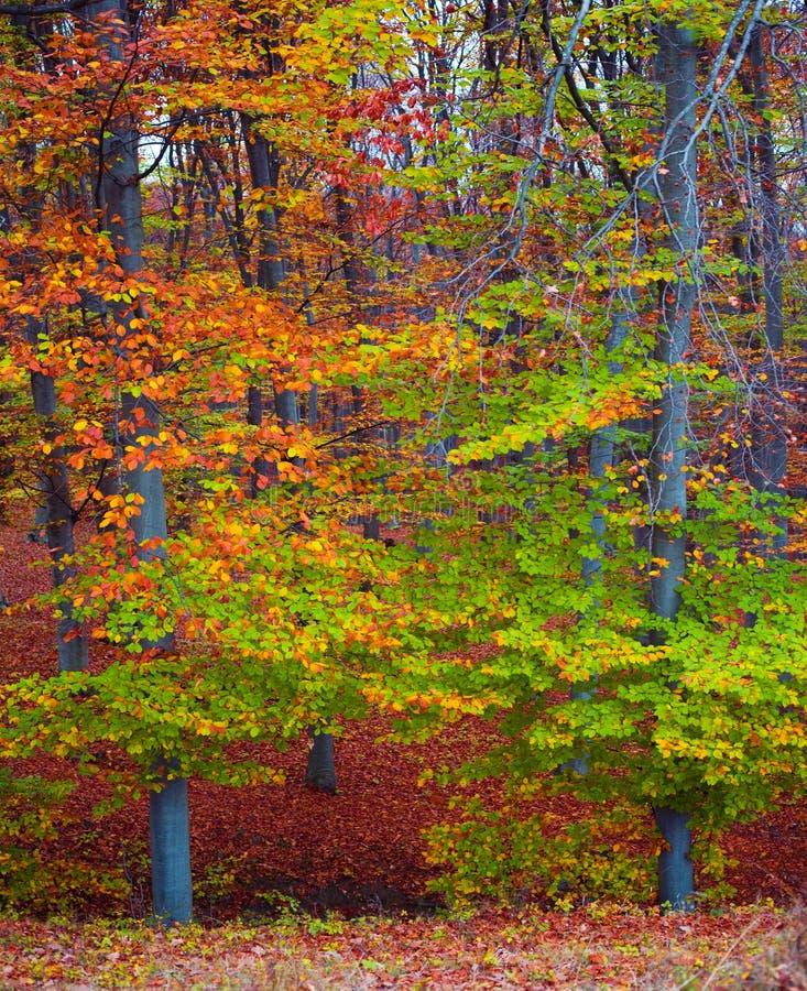 foresta di caduta di colori fotografia stock