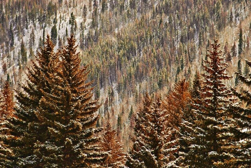 Foresta di colore di autunno immagini stock