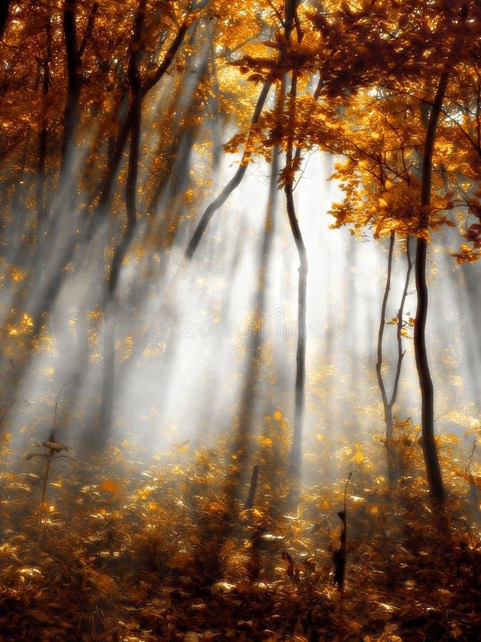 Foresta di colore rosso di autunno fotografia stock