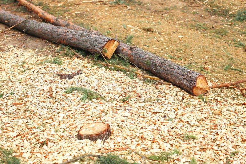 Foresta di disboscamento e della natura - abbattimento degli alberi immagini stock libere da diritti
