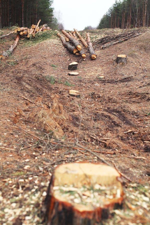 Foresta di disboscamento e della natura - abbattimento degli alberi fotografia stock