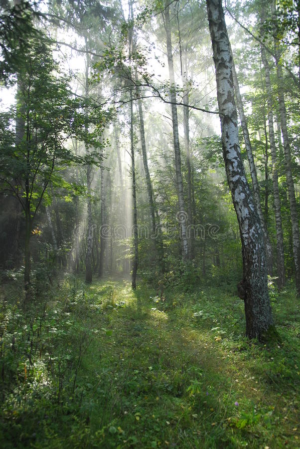 Foresta di Fairy-tale. immagini stock libere da diritti