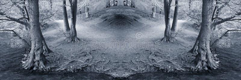 Foresta di fantasia. immagini stock libere da diritti