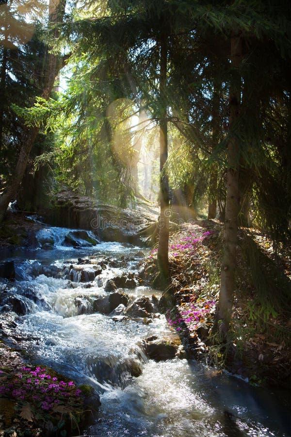 Foresta di fioritura della molla; Fiori della molla e della torrente montano immagine stock libera da diritti
