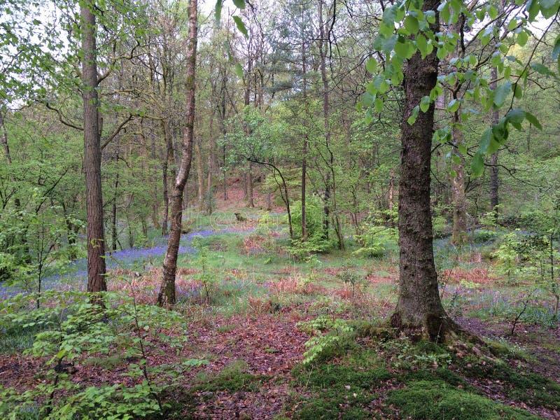 Foresta di Grizedale fotografia stock