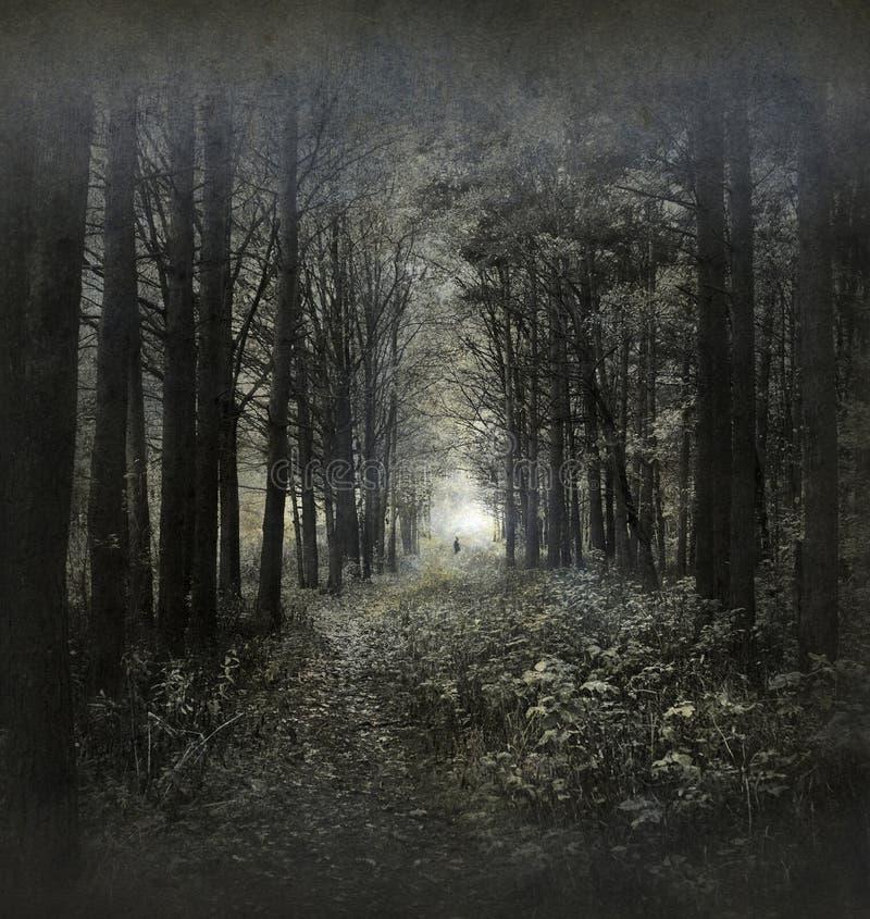 Foresta di Hauntied fotografia stock