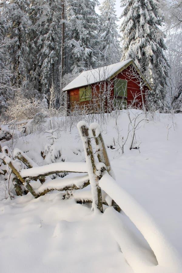 Foresta di inverno. fotografia stock libera da diritti