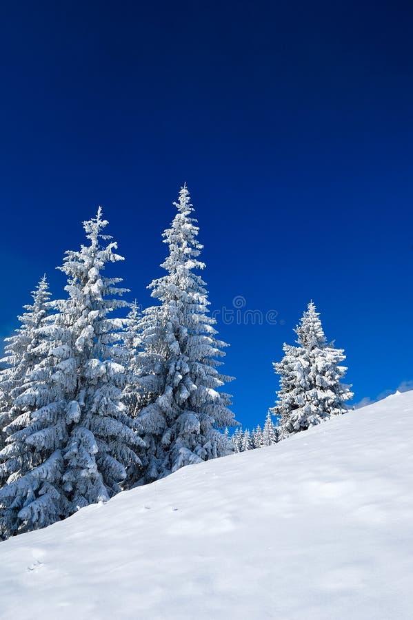 Foresta di inverno fotografia stock libera da diritti