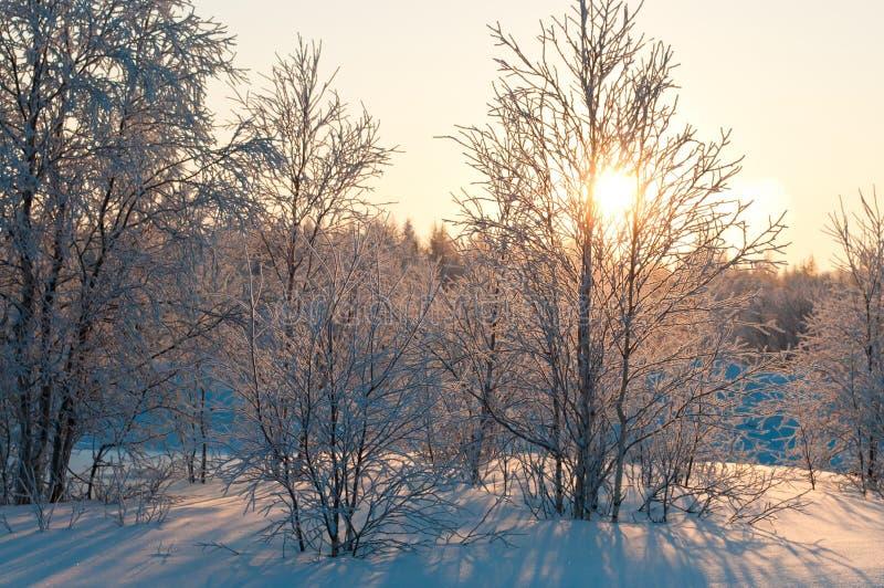 Foresta di inverno fotografie stock libere da diritti