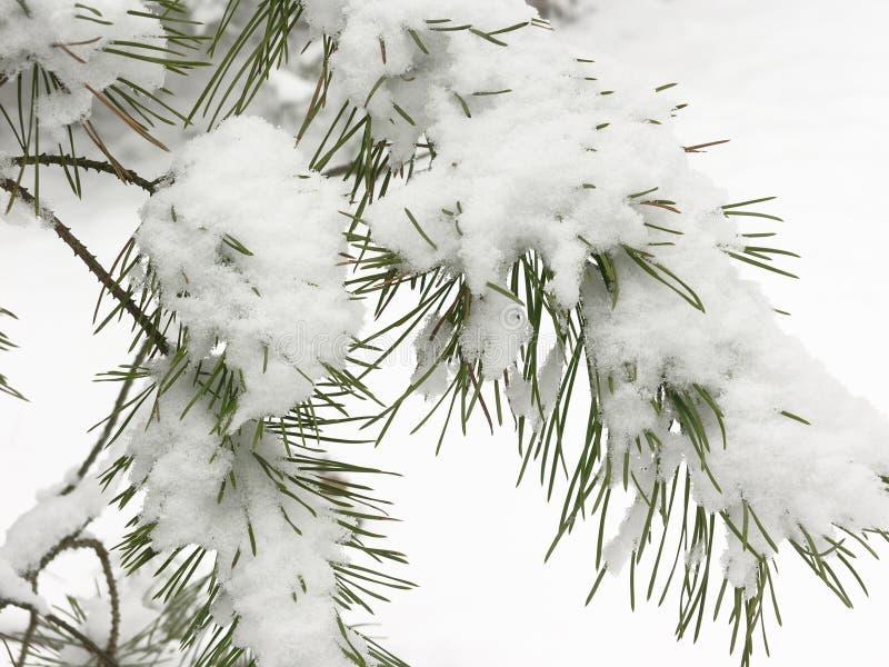 Foresta di inverno immagine stock