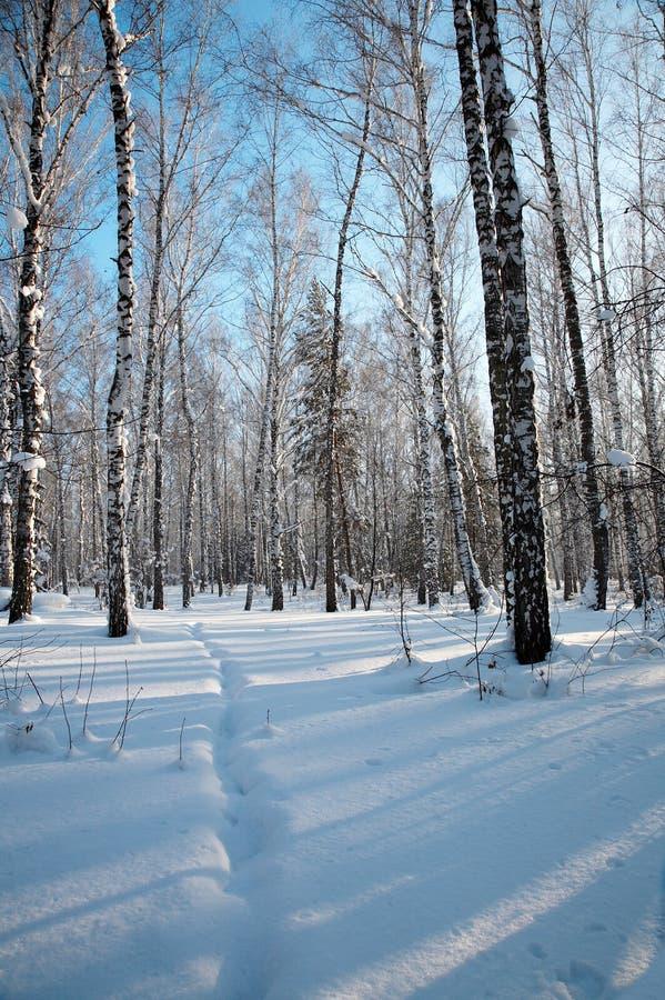 Download Foresta di inverno fotografia stock. Immagine di neve - 7322734
