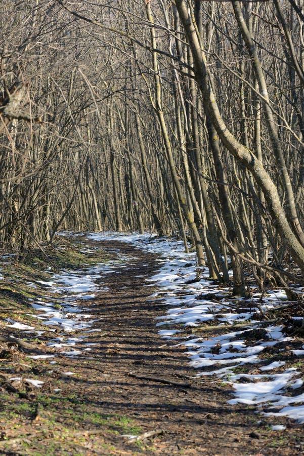 Foresta di inverno al crepuscolo fotografie stock libere da diritti