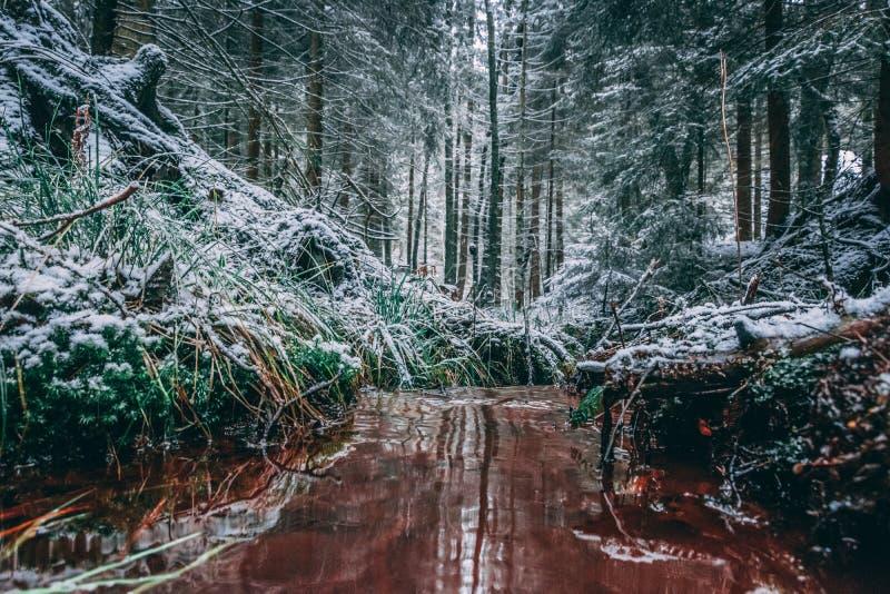 Foresta di inverno con gli alberi coperti di neve fotografia stock libera da diritti