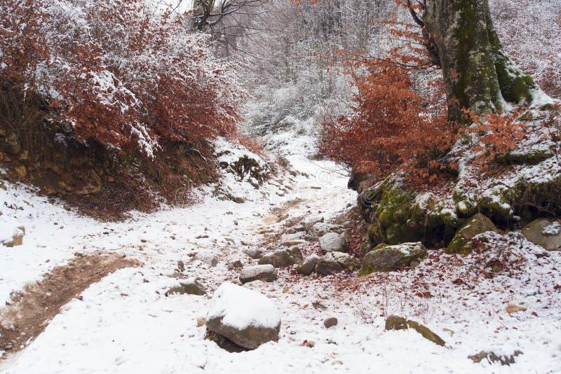 Foresta di inverno delle montagne fotografia stock libera da diritti